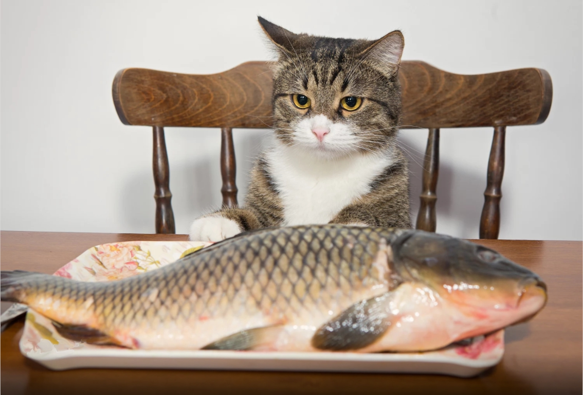 alimentação-animais-domesticos