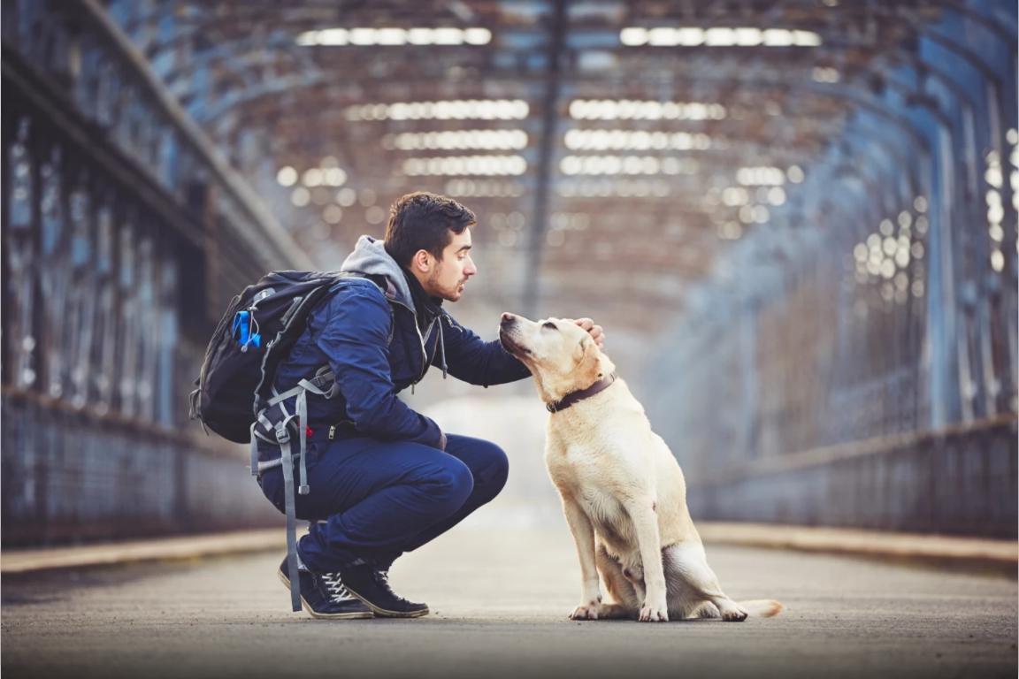 viajar-animais-domesticos